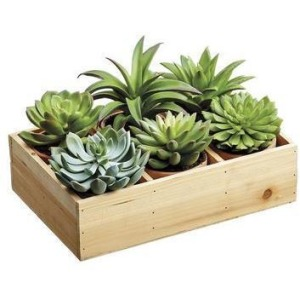 Potted Succulent (6 Styles/Wood box) Two Tone Green
