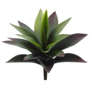 """11"""" Agave Plant with 19 Leaves Green"""