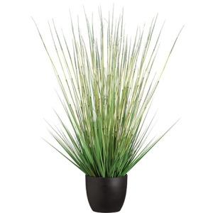 """41"""" Grass/Horse Tail Bush in Pot"""