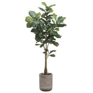 5.5' Fiddle Leaf Tree in Fiber Cement Planter Green
