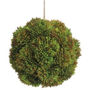 "4"" Sedum Orb Green"
