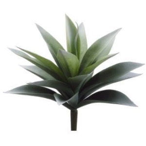 "11"" Agave Plant with 19 Leaves Frosted Green"