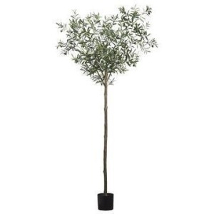 """95"""" Olive Tree in Pot Two Tone Green"""