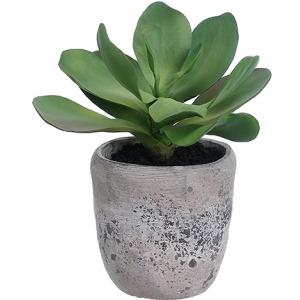 Kalanchoe Plant in Cement Planter