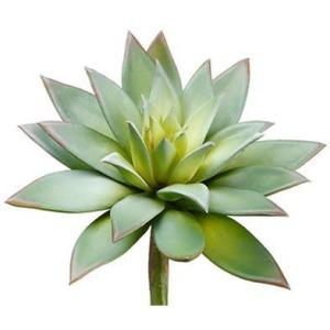 Echeveria Pick Green Gray