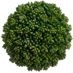 """5.5"""" Succulent Orb"""