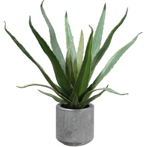 """19"""" Agave in Cement Pot"""