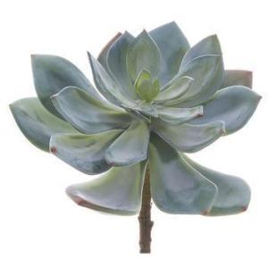 """6"""" Echeveria Pick  Green Gray"""