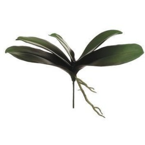 "13"" Phalaenopsis Orchid Leaf Plant Green Burgundy"