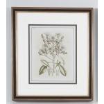 35-0062a Tinted Botanical - I