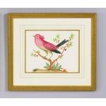 32-0008d Pink Bird/black Tail