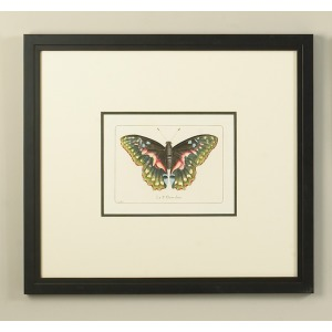 30-0055c Butterfly Menagerie
