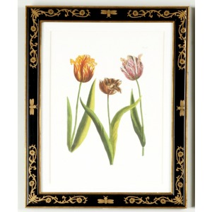 35-0008a Tulip/dec.frame988