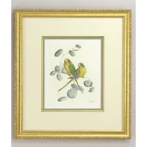 30-0029b Yellow Parakeets - B