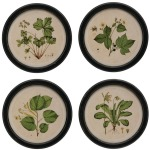 Round Framed Wall Decor w/Vintage Botanical Print, 4 Styles
