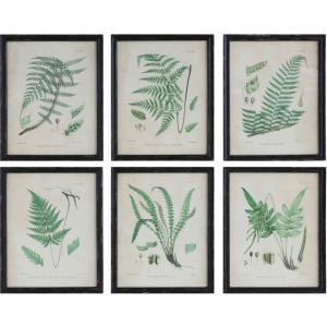 Wood Framed Wall Dcor w/ Vintage Ferns 6 Styles