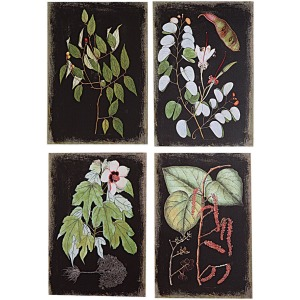 Canvas Wall Print w/ Botanicals 4 Styles