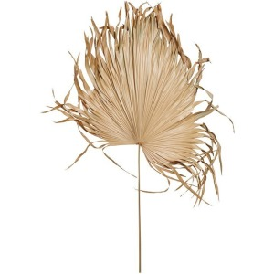 Dried Palm Fan Leaf, Natural