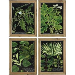 Wood Framed Wall Dcor w/ Botanical Image 4 Styles