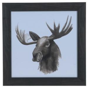 Animal Study (moose)