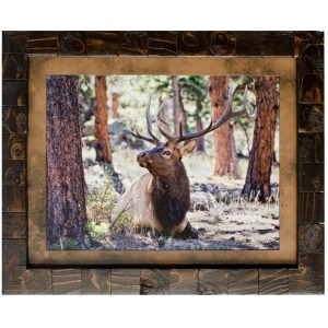 Elk Study Framed Art
