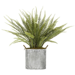 Boston Fern in Round Metal Planter