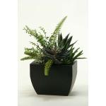 Aloe, Eecheveria, & Succulents in Metal Planter