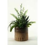 Aloe, Tillandsia & Echeveria in Ceramic Planter