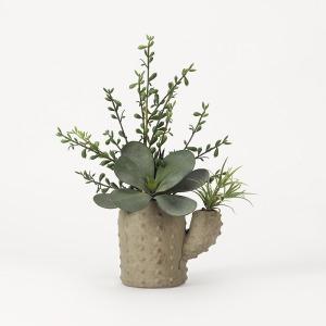 Aloe & Echeveria in Terra Cotta Cactus Planter