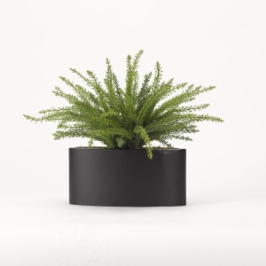 Heather Fern in Oval Metal Planter