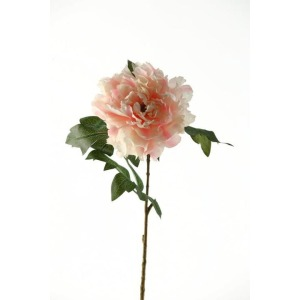 Pink sherbert peony stem