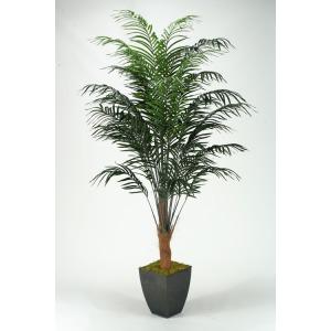 8′ Areca Palm Tree in Square Metal Planter