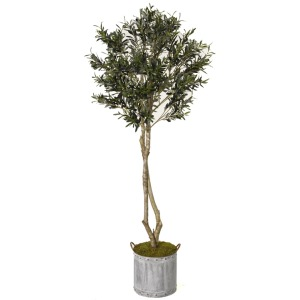 Olive Tree in Round Tin Planter