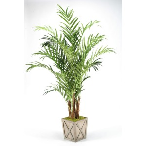 8' Kentia Palm in Weathered Wooden Box Planter