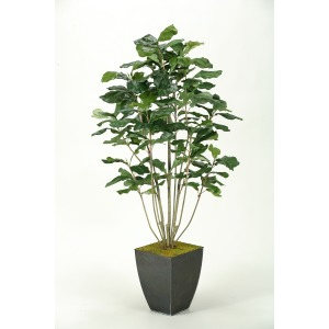 Fiddle Leaf Fig Plant in Square Metal Planter