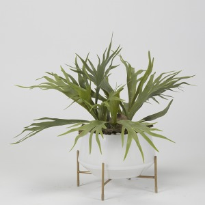 Staghorn Fern in White Glass Bowl w/Stand