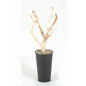Ghostwood Trunks in Round Metal Planter