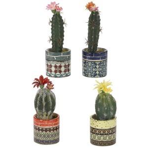 Assorted Cactus in Colorful Ceramic Cups – Set of 4