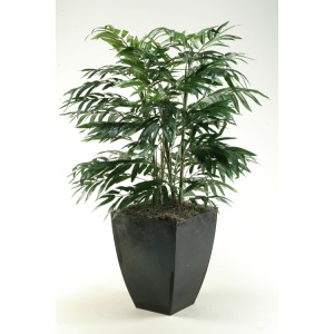 Phoenix Palm in Square Zinc Planter
