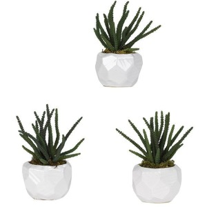 Worm Succulent in Glossy White Ceramic – Set of 3