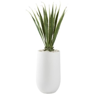 5.5′ Agave Plant In Large Round White Planter