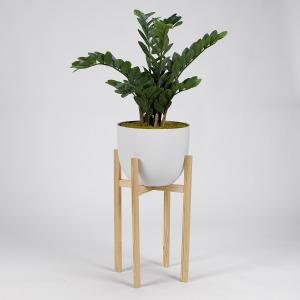 Zamifolia Plant in White Planter w/Wood Stand