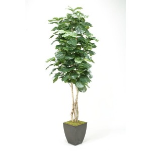 8' Fiddle Leaf Fig Tree in Square Metal Planter