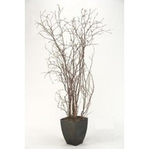 Birch Branches in Square Metal Planter