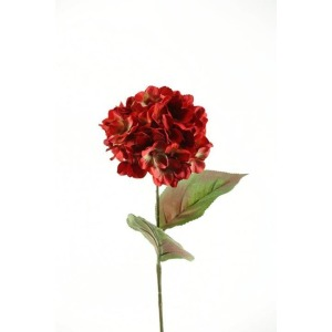 Two tone red hydrangea stem