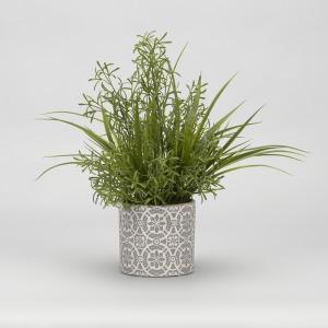 Wild Asparagus & Grass in Round Cement Planter