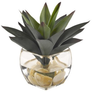 Aloe Plant in Glass Cube