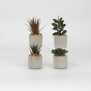 Assorted Succulents in Mini Cement Cylinders - Set of 4