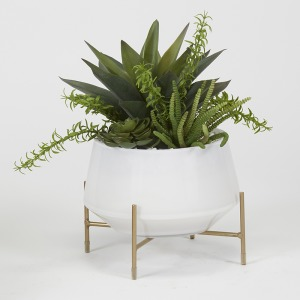 Aloe & Succulents in White Glass Bowl w/Stand