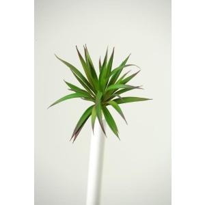 Green/Burgundy Succulent